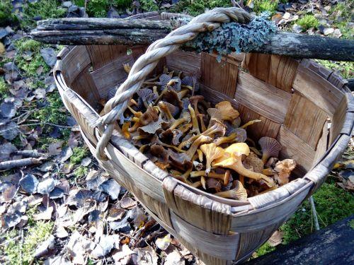 mushrooms stick autumn
