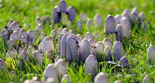 mushrooms a lot of a lot