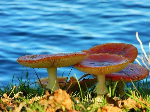 mushrooms nature forest mushroom