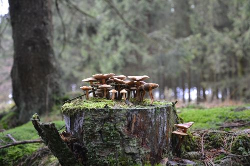 mushrooms forest mushrooms forest floor