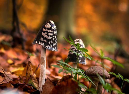 mushrooms forest moist