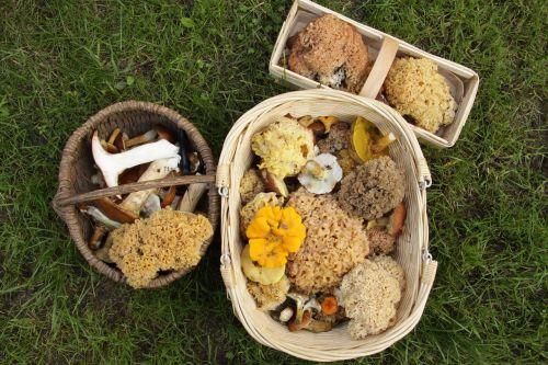 mushrooms collect mushroom picking
