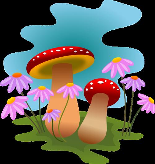mushrooms autumn fungi