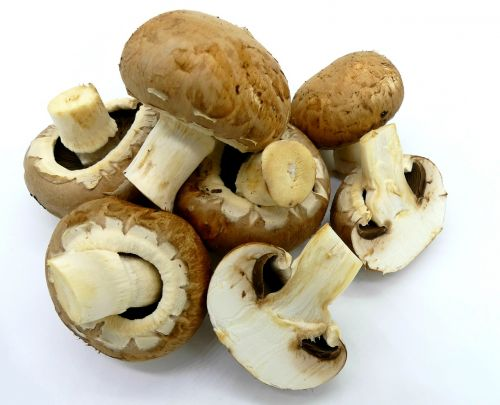 mushrooms brown mushrooms food