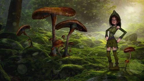 mushrooms forest fee