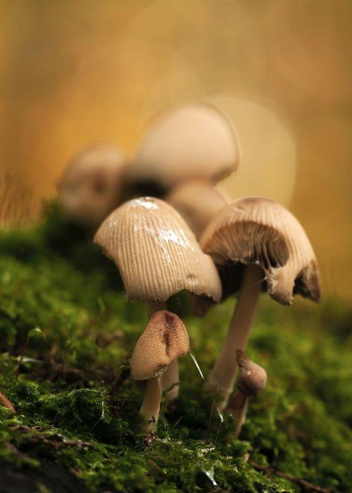 mushrooms mushroom group forest