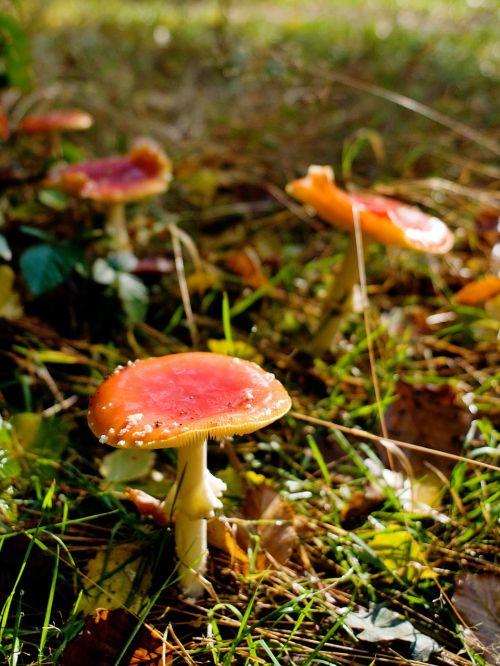 mushrooms forest autumn