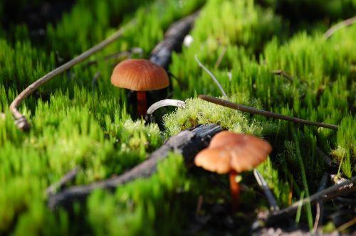 mushrooms forest ground