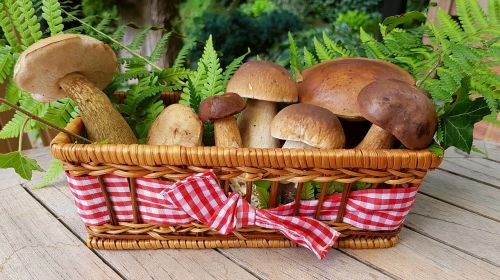 mushrooms food mushrooms forest mushrooms
