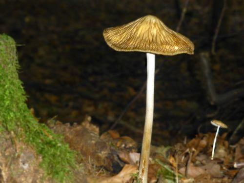 mushrooms lamellar filigree