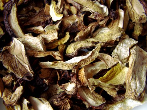 mushrooms dried drying