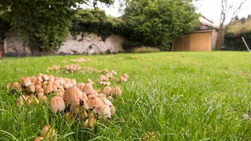 mushrooms turf garden