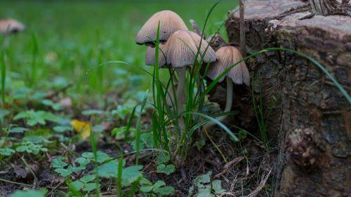 mushrooms autumn forest