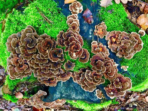 mushrooms moss wild mushrooms