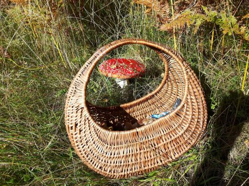 mushrooms amanita shopping cart