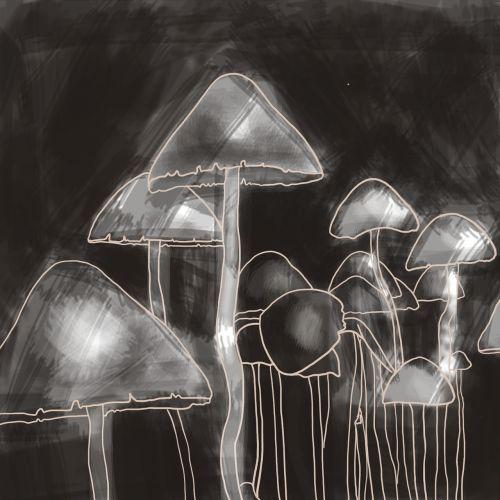 mushrooms graphics drawn