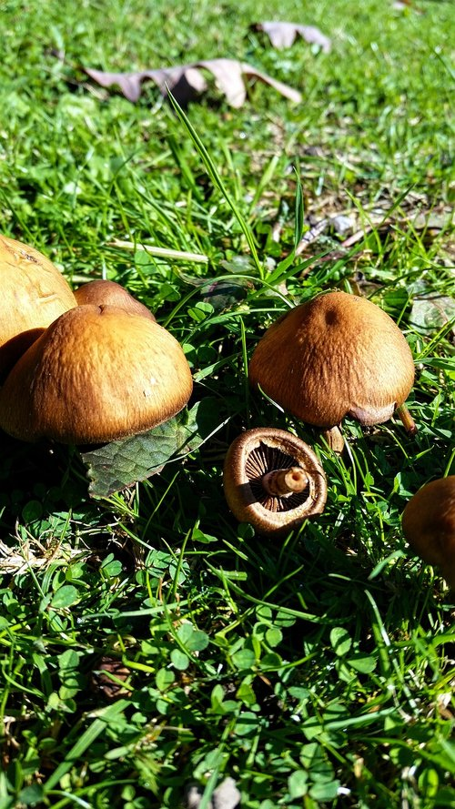 mushrooms  wild mushrooms  brown