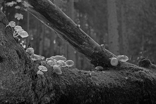 mushrooms  book mucus rüblinge  forest