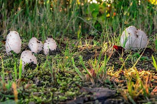 mushrooms  forest  white