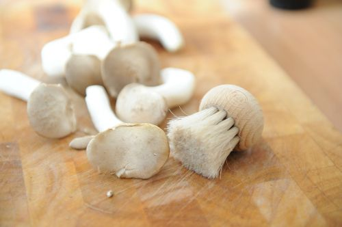 mushrooms brush board