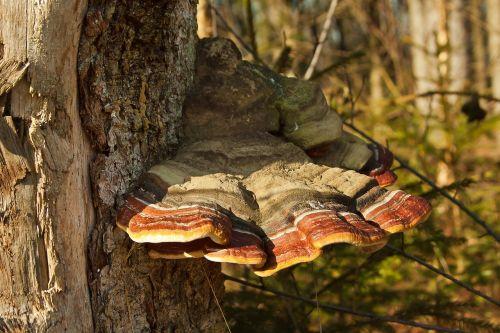 mushrooms forest tree fungus