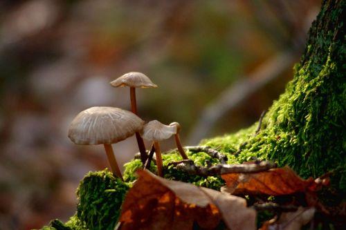 mushrooms forest nature