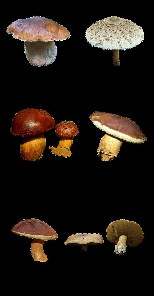 mushrooms nature forest