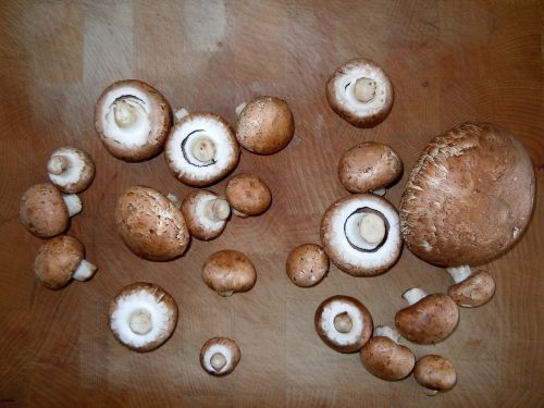 mushrooms wooden board cook