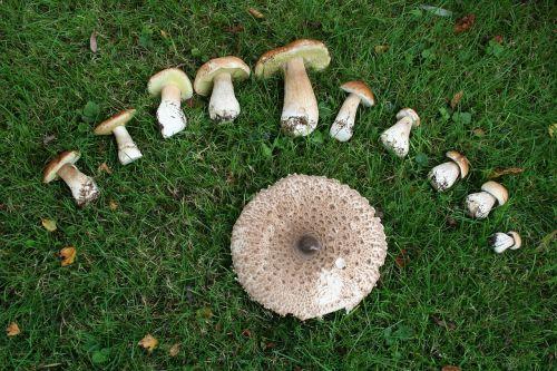 mushrooms green eat