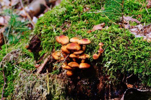 mushrooms tree stump nature