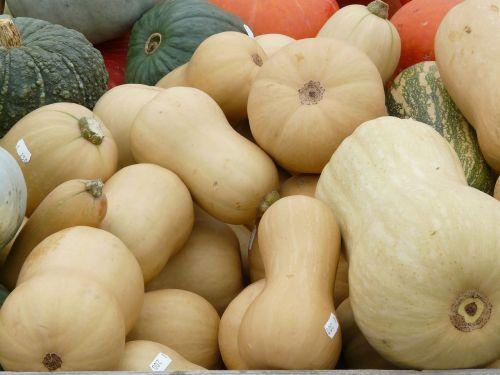 musky winter squashes cucurbita moschata pear pumpkin
