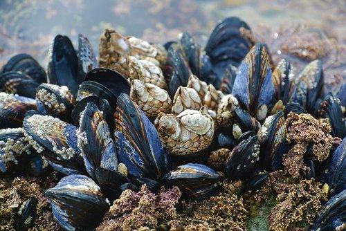 mussel  ocean  beach