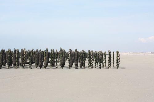 mussel sea beach