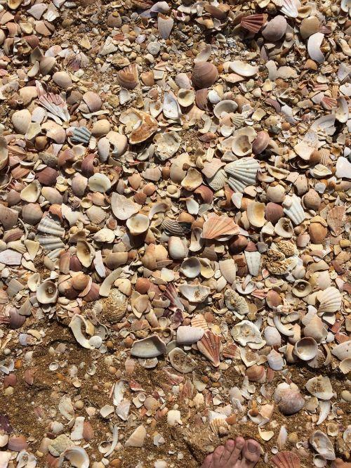mussels beach mussel shells
