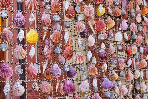 mussels shells ornament