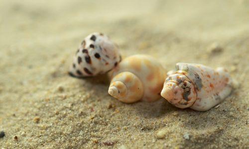 mussels snails sand