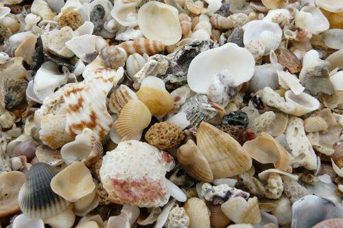 mussels beach decorative