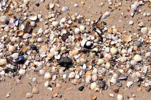 mussels beach sea