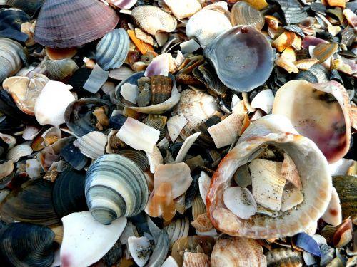 mussels shard beach