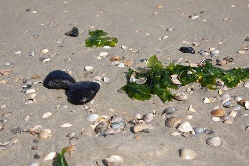mussels sand windspiel