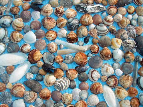 mussels mediterranean blue background