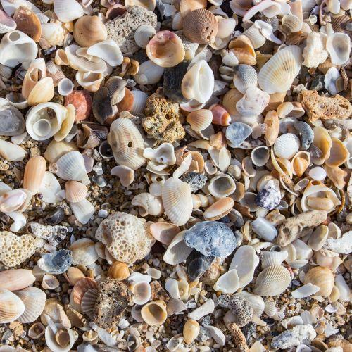 mussels beach shells