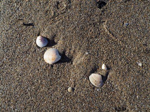 mussels sea beach