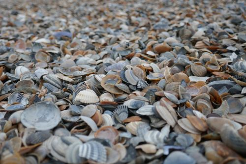 mussels beach sand