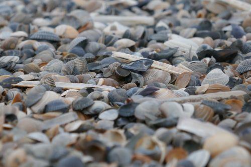 mussels beach stones