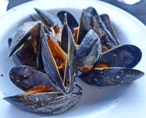 mussels steamed seafood