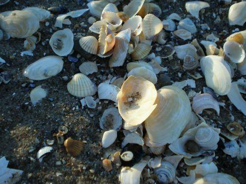 mussels back light baltic sea