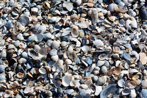 mussels  baltic sea  beach