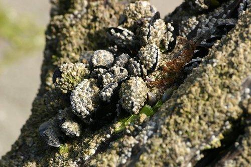 mussels  shells  sea