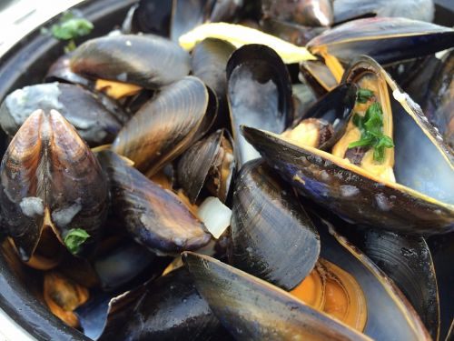 mussels seafood south